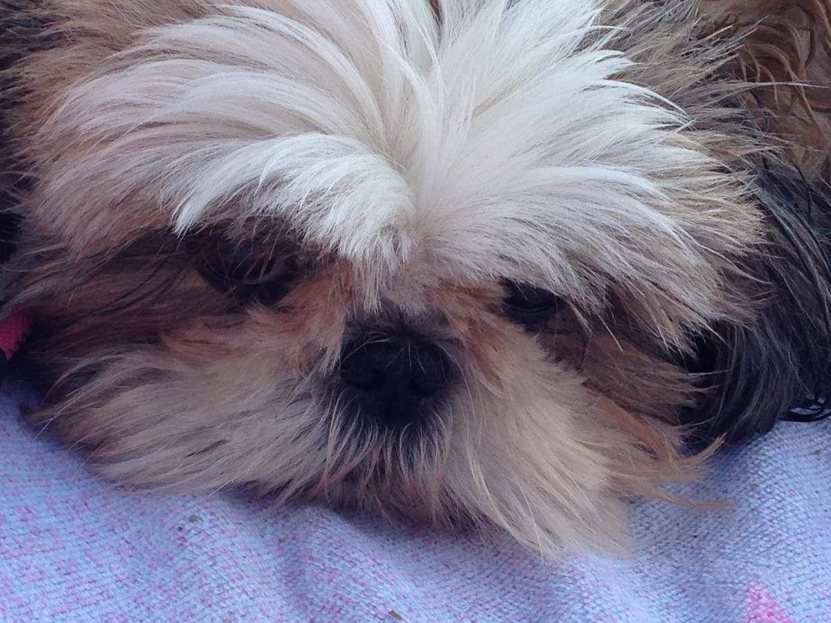 petite Hevy préfère rester sur la serviette !