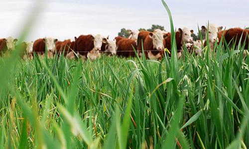 AGROECOLOGIA vs AGROTOXICOS