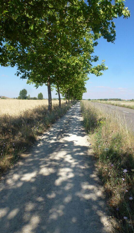 tournesol - un champ de vigne perdu - maison de troglodytiques - vieille faucheuse