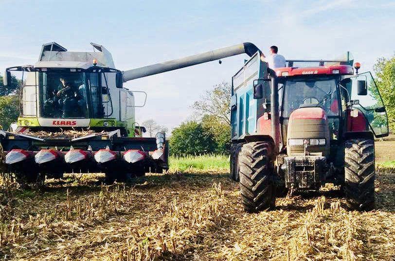 Battage maïs Sud Manche 🌽