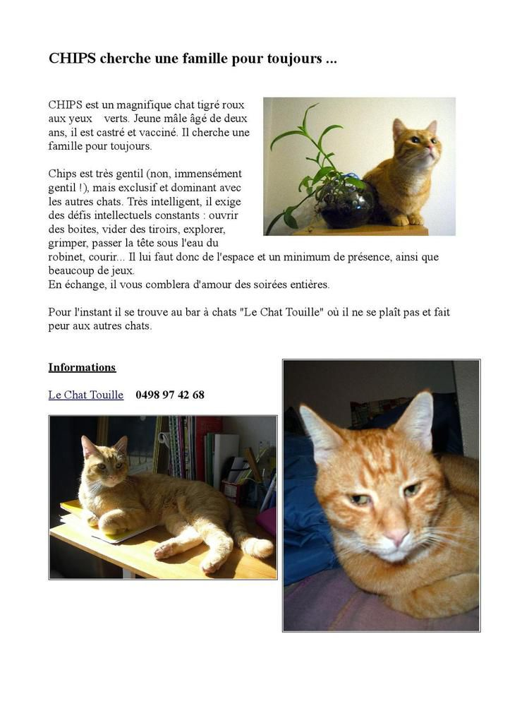 A adopter : CHIPS - chat exceptionnel mais exclusif !
