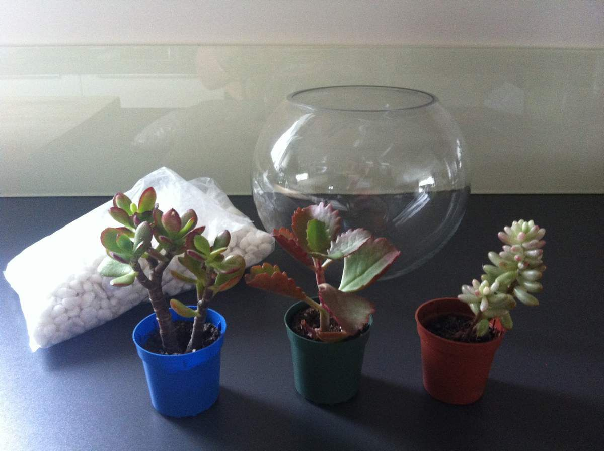 Terrarium Pour Plantes Grasses Diy My Little Deco