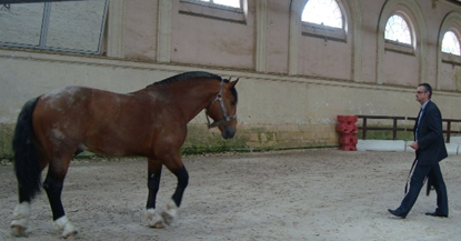 Guillaume ANTOINE - Horses and coaching