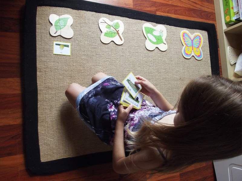Le cycle du papillon (2)