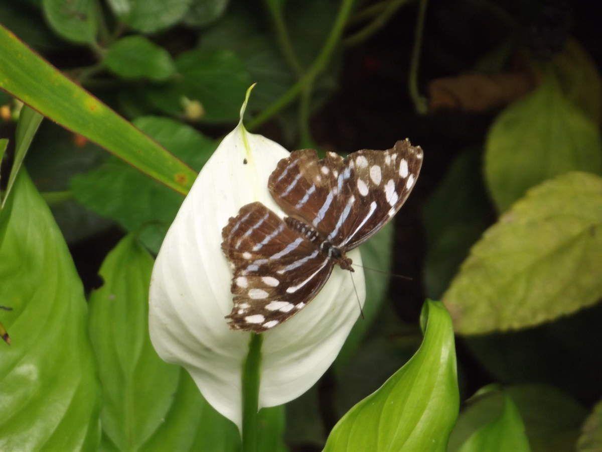 Visite de l'île aux papillons, à Noirmoutier
