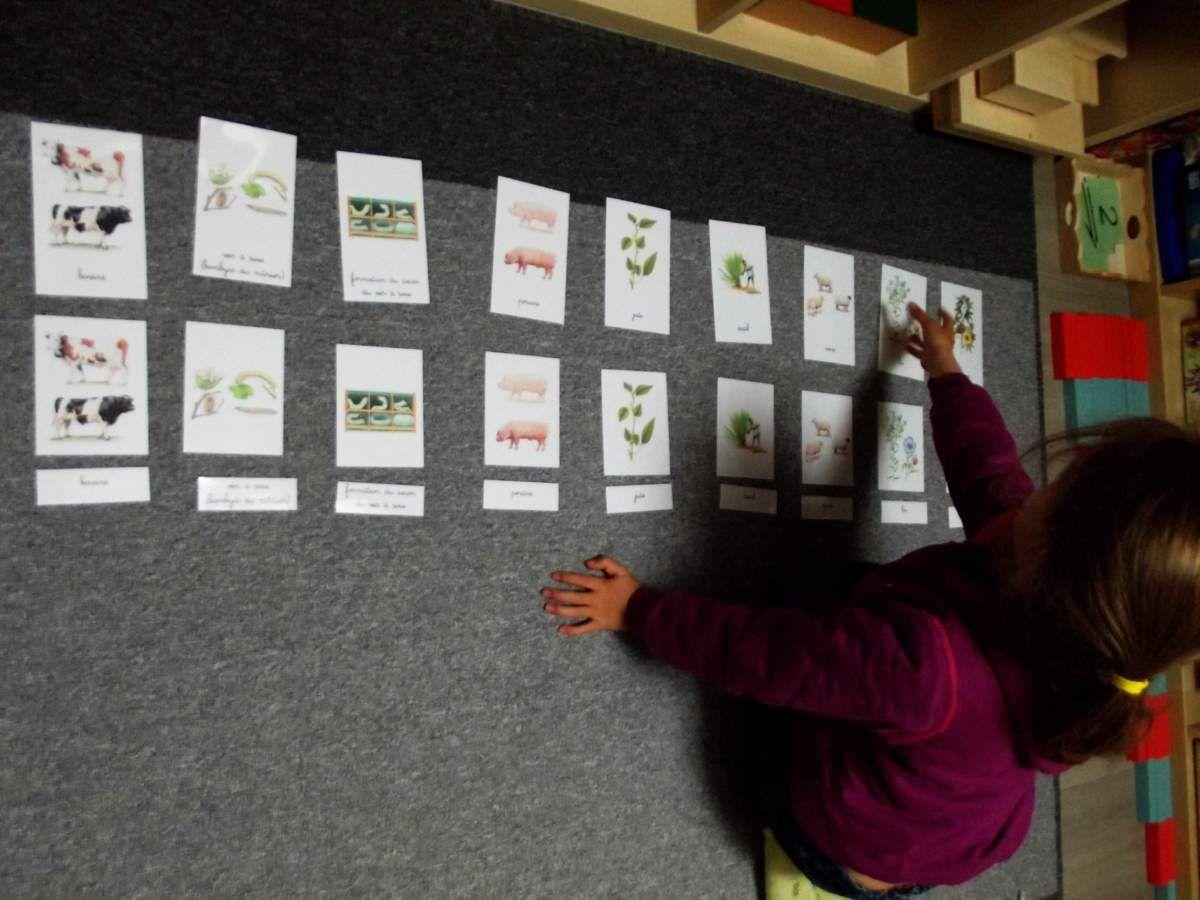 Mémorisation du nouveau vocabulaire &#x3B; les cartes en 3 parties.