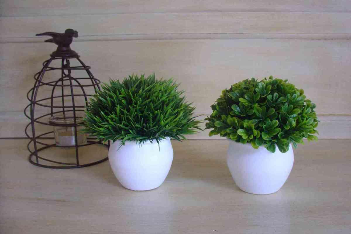 Les petites plantes d coratives le grenier de la presqu 39 le for Les plantes decoratives
