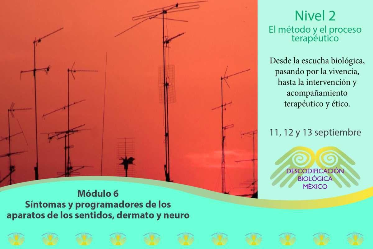 módulo 6 de 2° ciclo de Descodificación biológica México