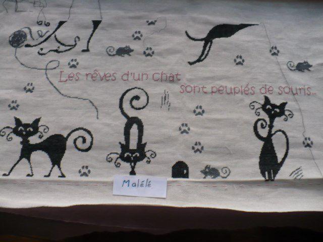 """SAL """"Les rêves de chats"""" - objectifs 5 -Les Photos"""