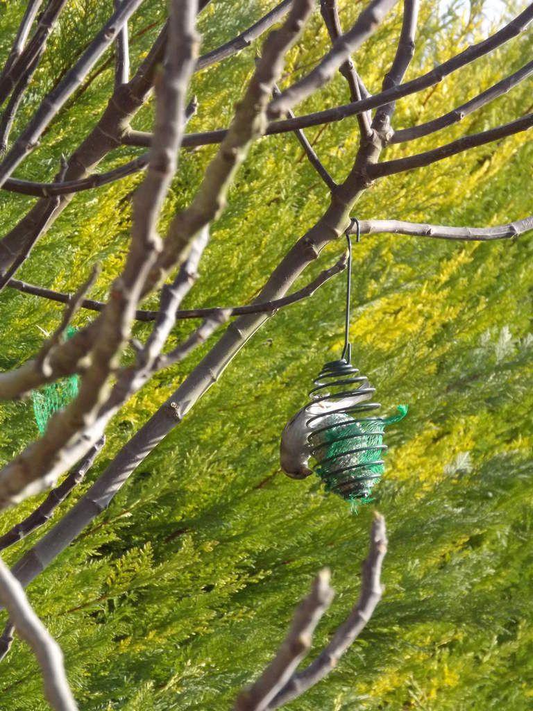 des oiseaux dans le jardin....