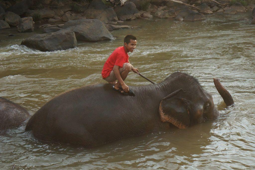 La baignade des éléphants du Tad Lo Lodge