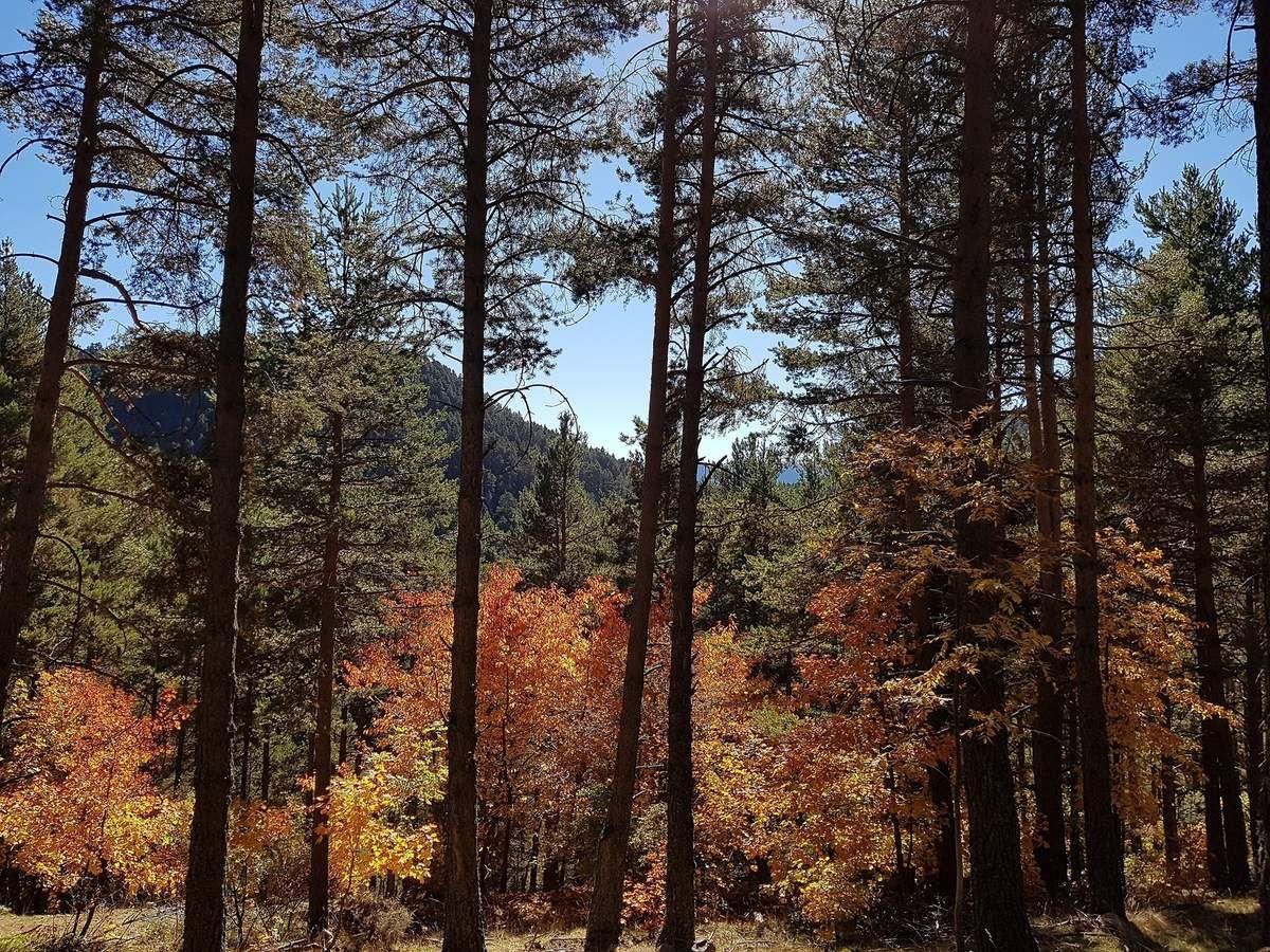 couleurs et saveurs d'automne, que la montagne est belle !