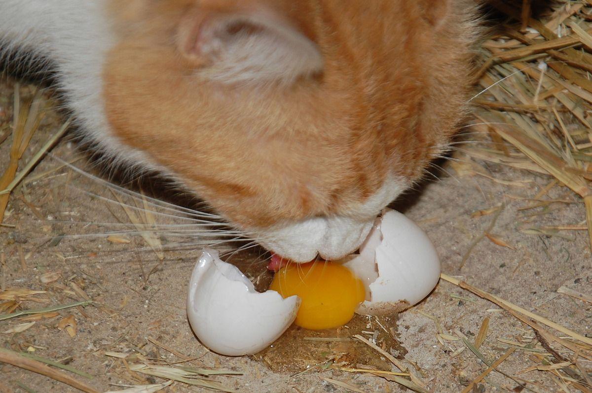 La chasse aux oeufs pour Pâques