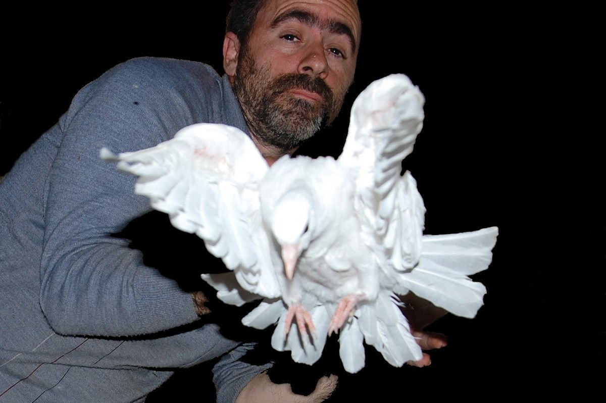 Et voilà la petite colombe de la paix, pour fêter la paix qui commence en ce jour du débarquement.