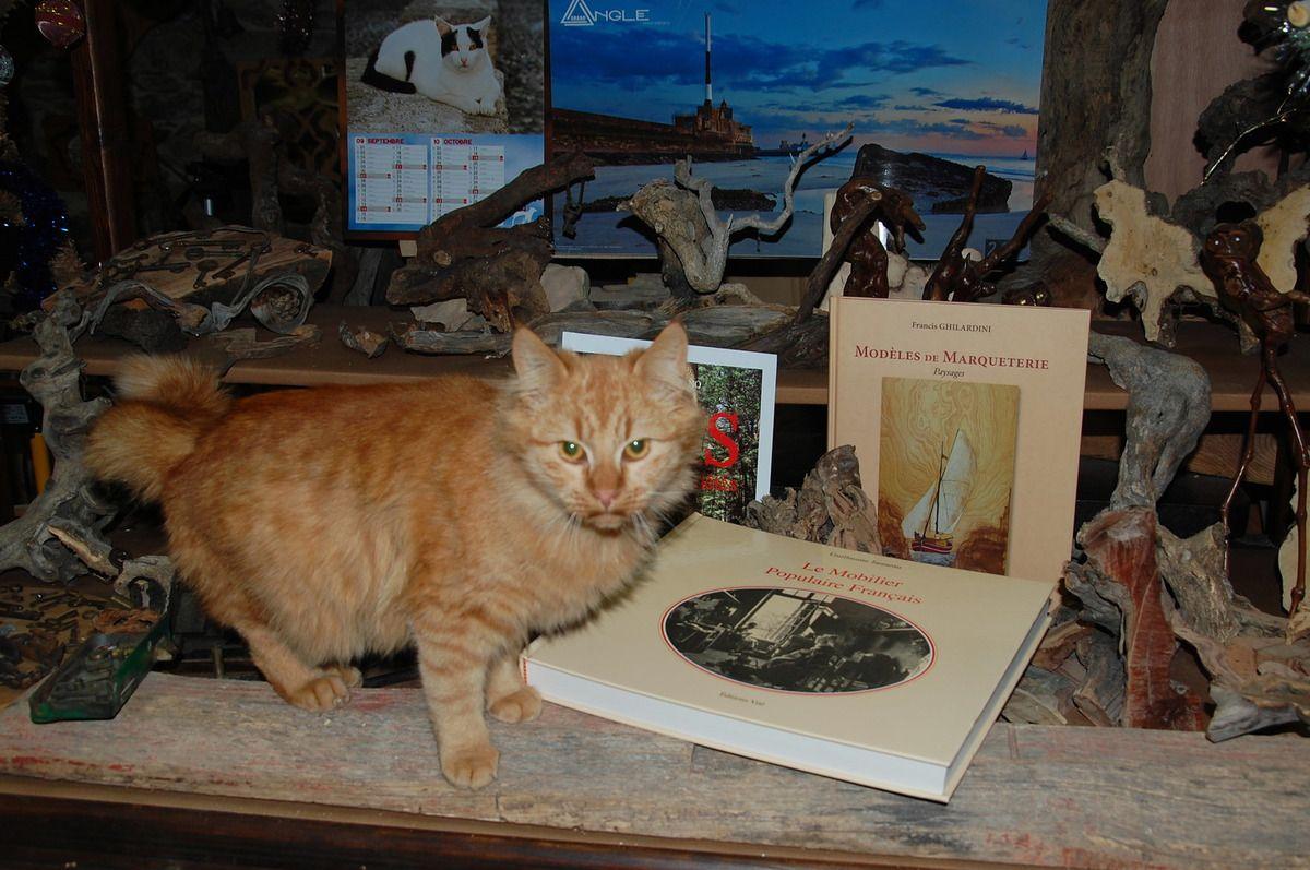 Si mon stagaire félin ne sait pas lire, les autres à l'atelier oui enfin je le souhaite.