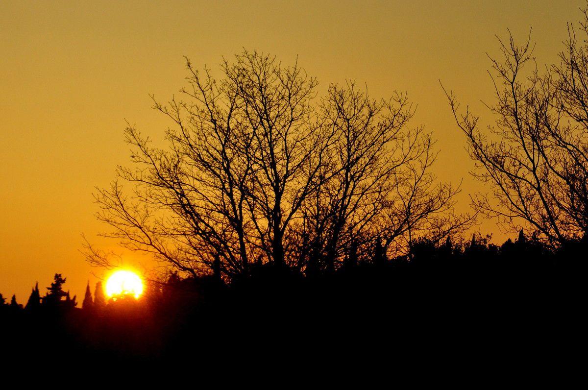 Soleil et arbre maintenant.