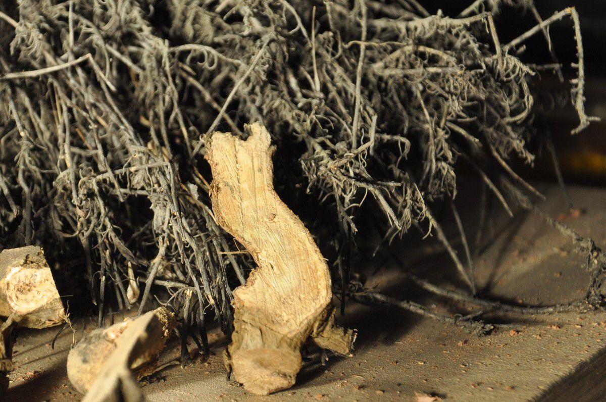 Un bois devant l'immortelle.