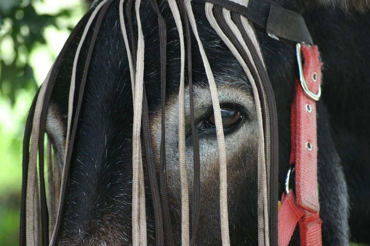 Médiation par l'animal : l'âne miroir de l'âme
