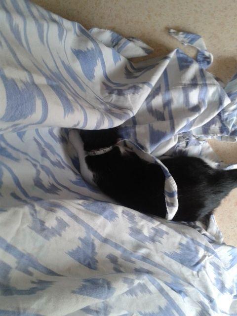 c'est là que je dormais, c'est à moi!!