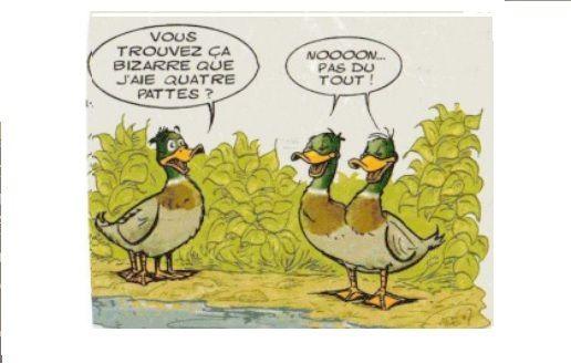 """""""CLIC"""" pour voir les canards dragueurs"""