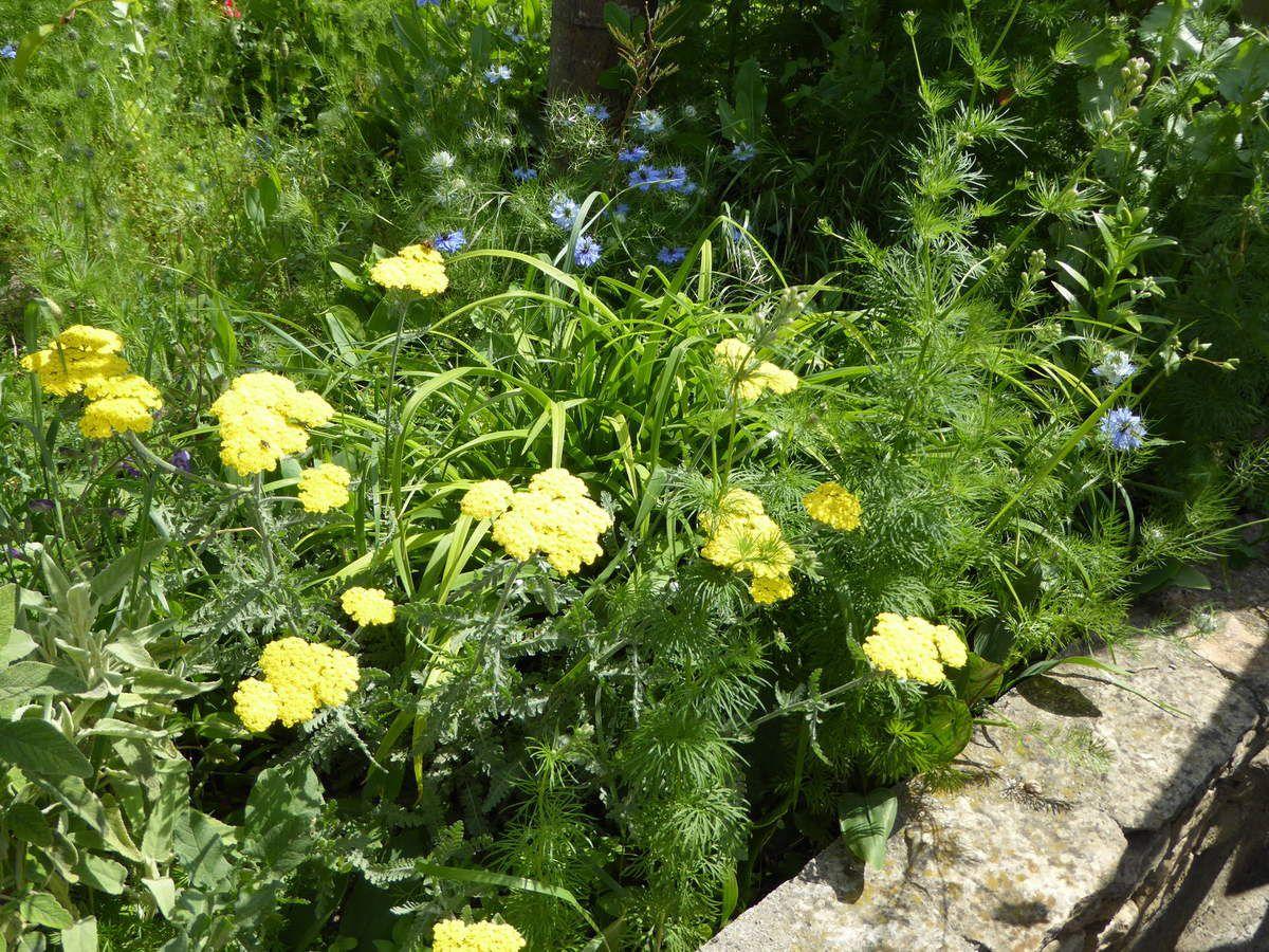 jardin champ tre le jardin des iris du barry pour les personnes qui aiment les iris le. Black Bedroom Furniture Sets. Home Design Ideas