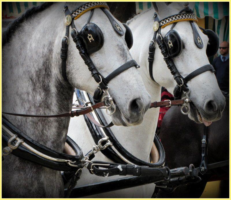 &quot&#x3B; FERIA &quot&#x3B;  les chevaux ...