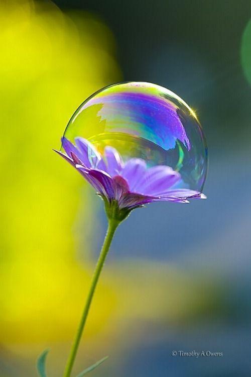 Mon cœur est ouvert . Je permets à l'Univers de me guider dans mes pensées ,dans mon intuition , mes sentiments et mes rencontres . Je suis totalement ouvert pour recevoir l'orientation et de la suivre .