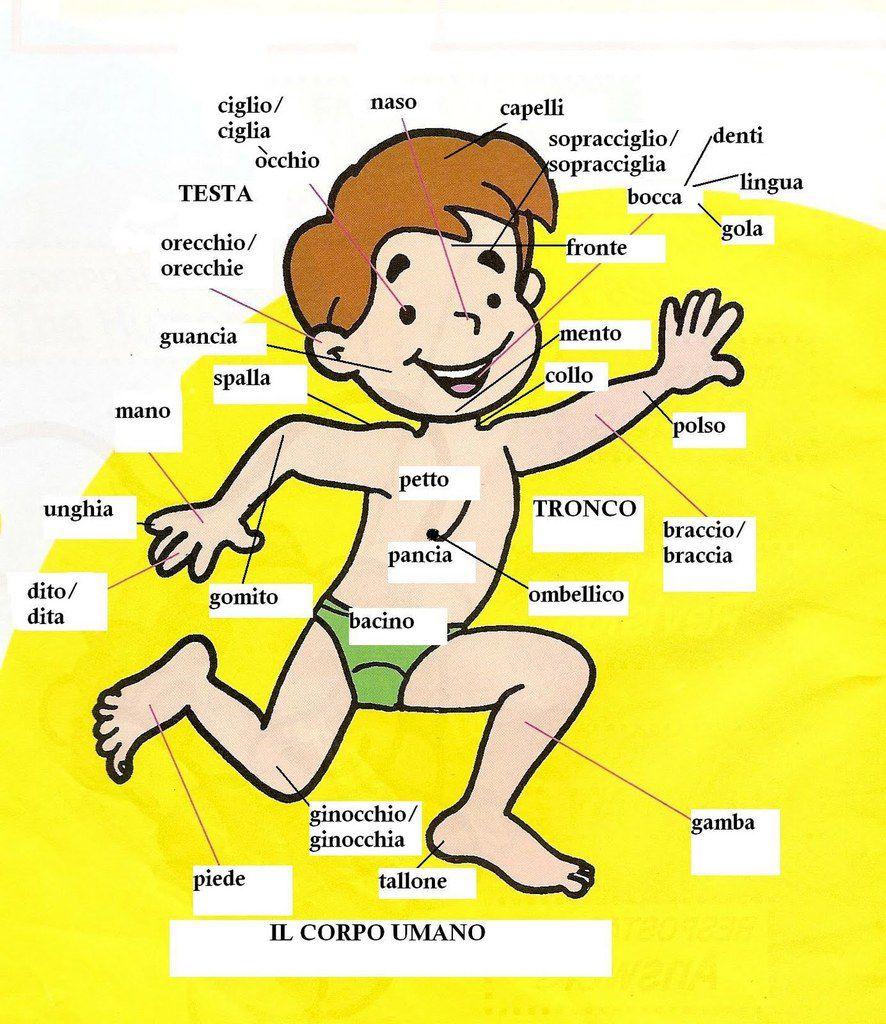 Ben noto Esplorando il corpo umano - I nostri ebook XG44
