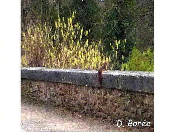 Un écureuil !
