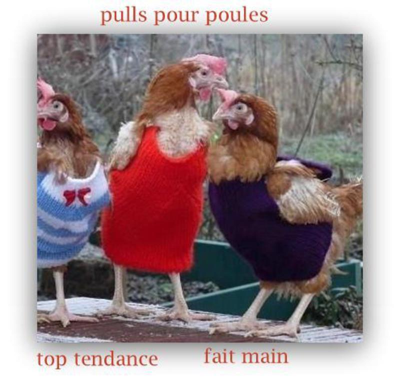 Des poules de luxe !