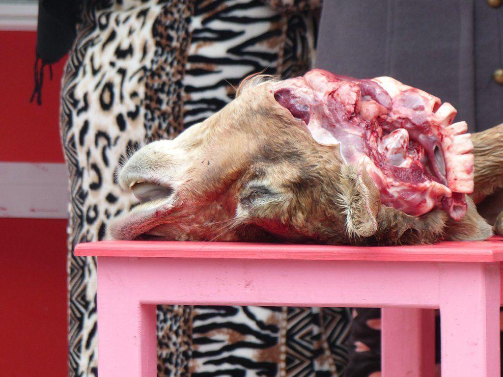 En arrière-plan ce n'est pas un tigre ou une panthère mais une cliente dans sa magnifique gandoura !