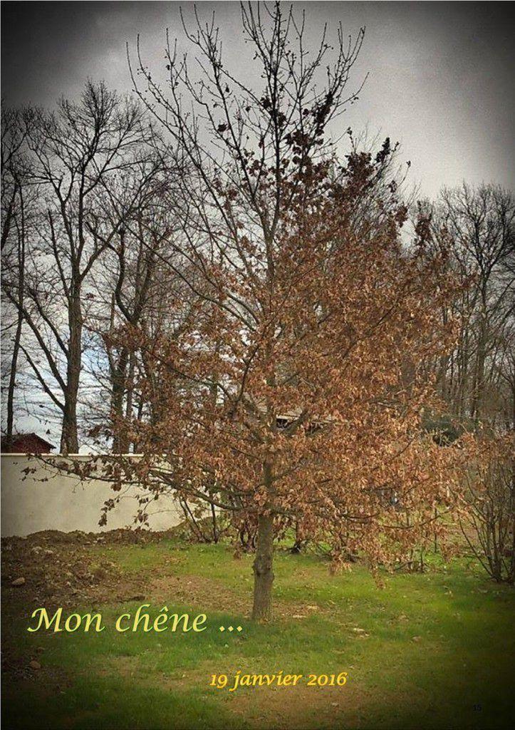 Mon chêne...