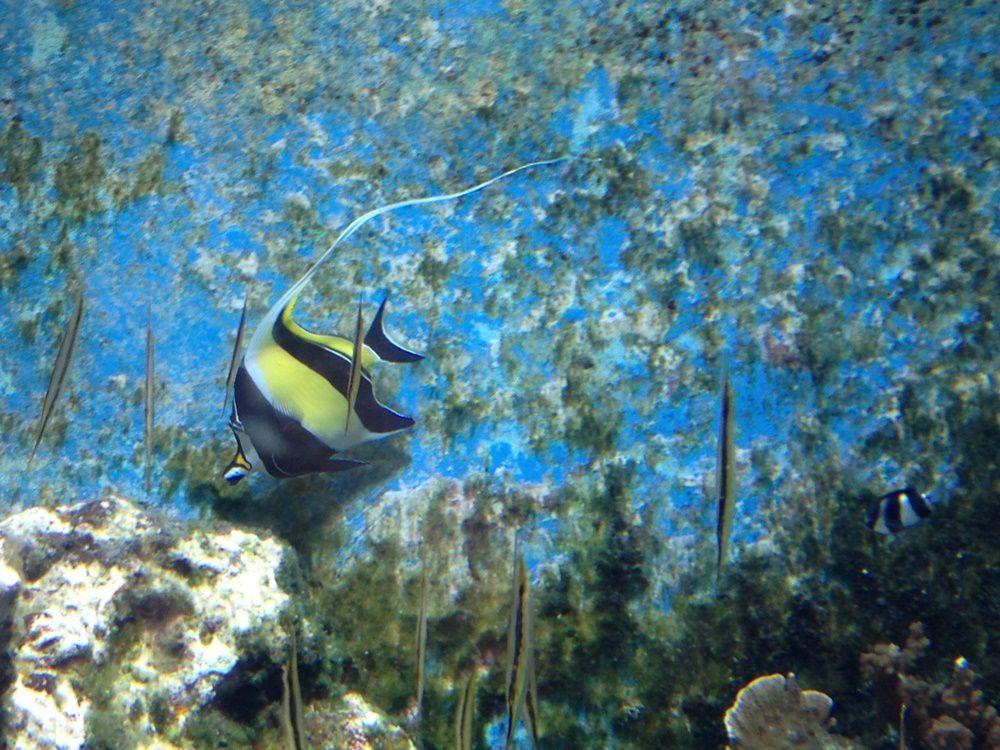 Diversité : mèche qui dépasse et poissons verticaux...