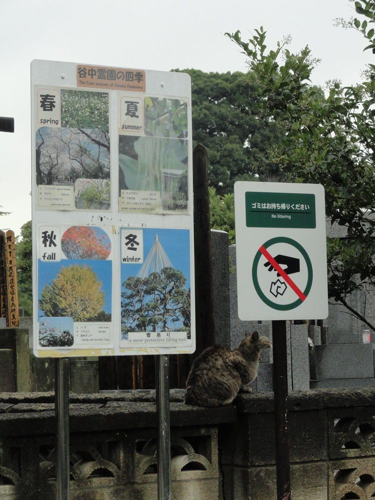 Chat en bordure du cimetière Yanaka