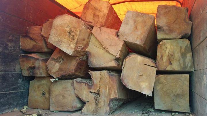 Contrebande de bois au Mozambique: 1.500 conteneurs saisis