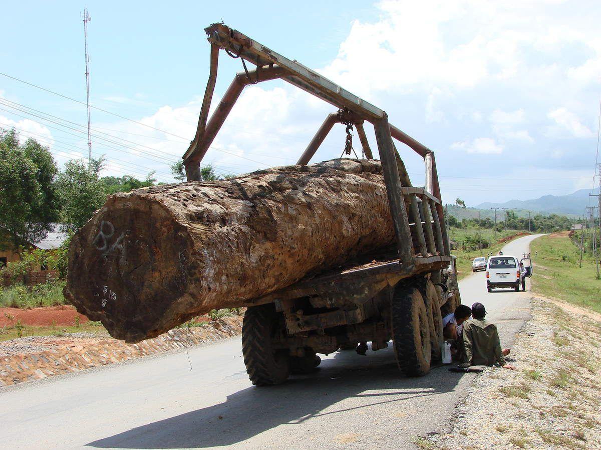 LAOS – L'armée vietnamienne impliquée dans la contrebande de bois