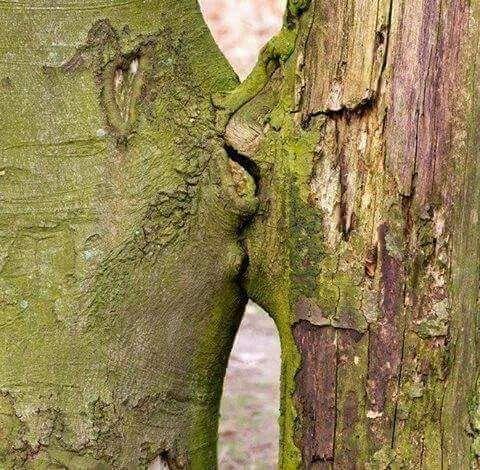 Plein d'Ovide ( un tilleul près d'un chêne...)