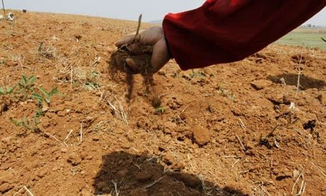 """RPDC : les récoltes touchées par la """"pire sécheresse depuis un siècle"""" (KCNA)"""