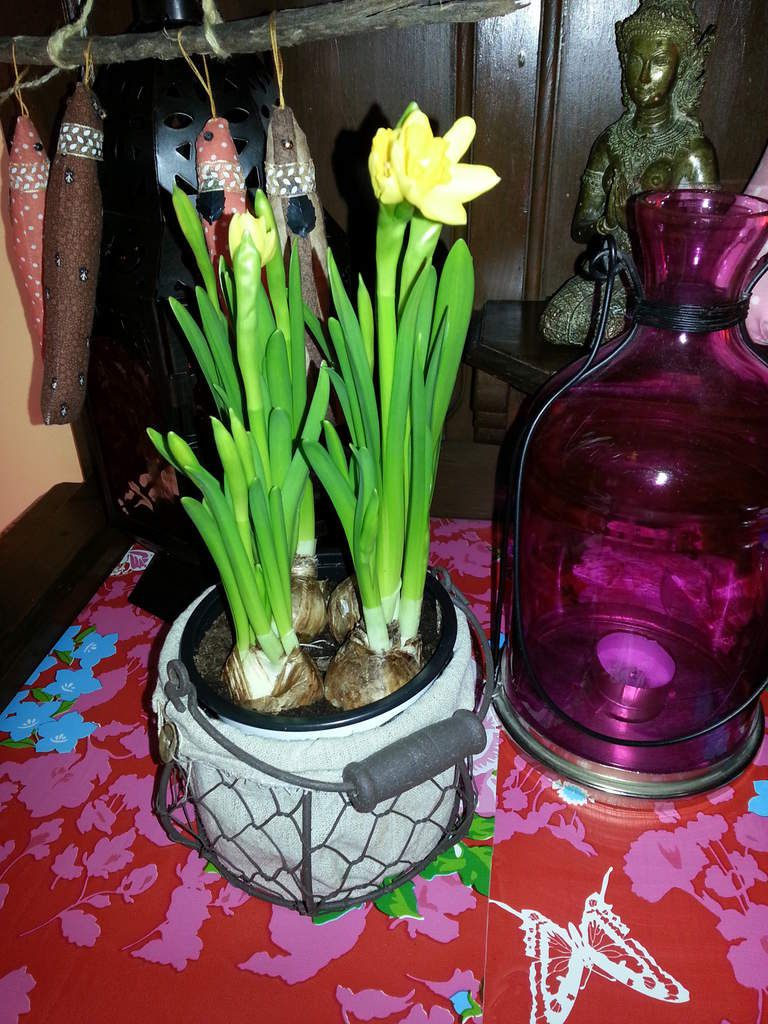 Et pour la petite touche printemps, un petit pot de narcisses, qui s'ouvrent à vue d'oeil! Bonne semaine à toutes et tous!!!!