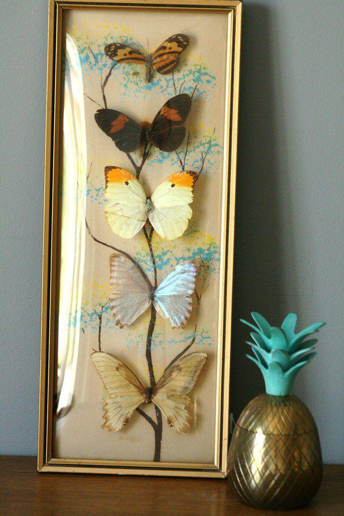 Tableau papillons taxidermie Vintage