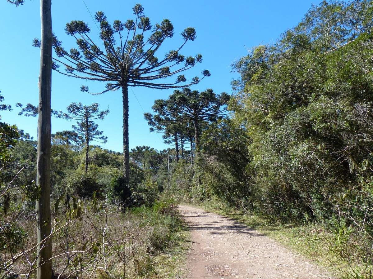 São José do Norte - Fos de Iguaçu