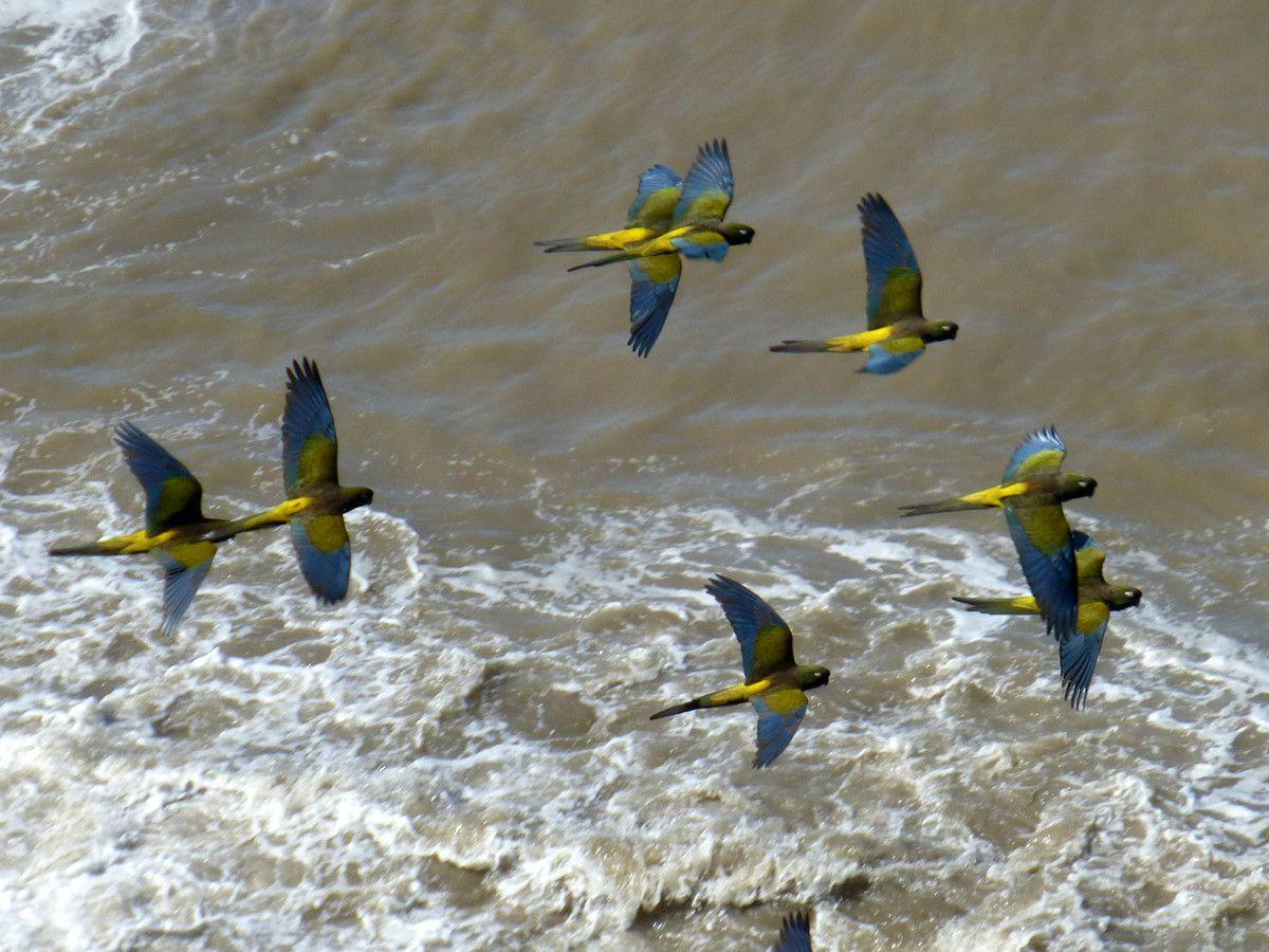Oiseaux d'Amérique du Sud 1