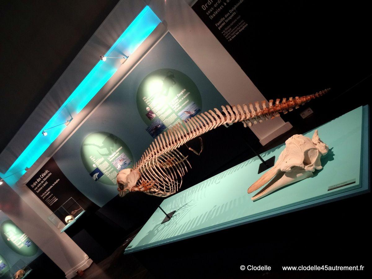 - BALEINES! du 18 Octobre 2014 au 30 Août 2015 au MUSEUM d'ORLEANS