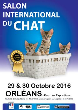 SALON INTERNATIONAL DU CHAT D'ORLEANS les 29 et 30 octobre au PARC EXPO