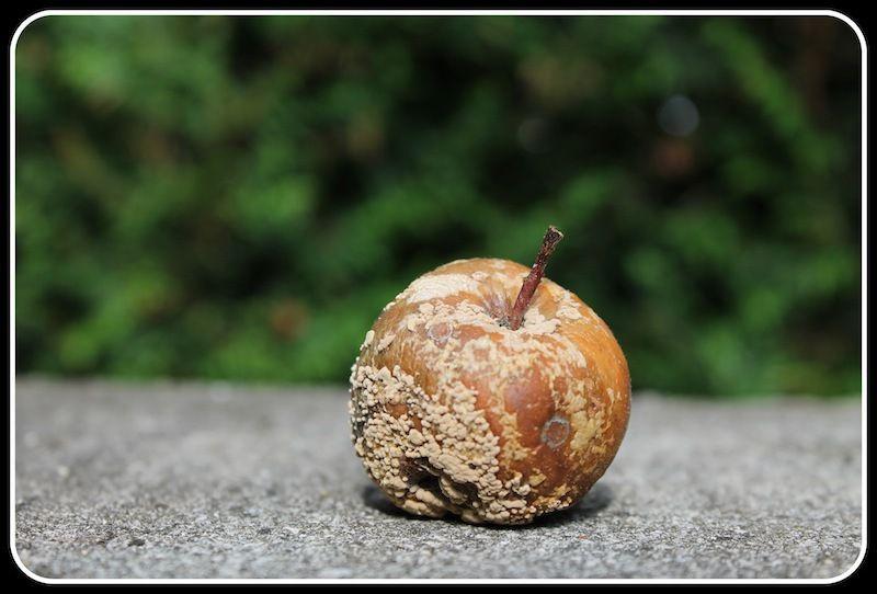 un parfum de pommes flotte dans l'air