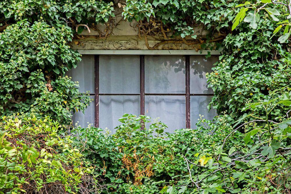 Balade nature dans Paris
