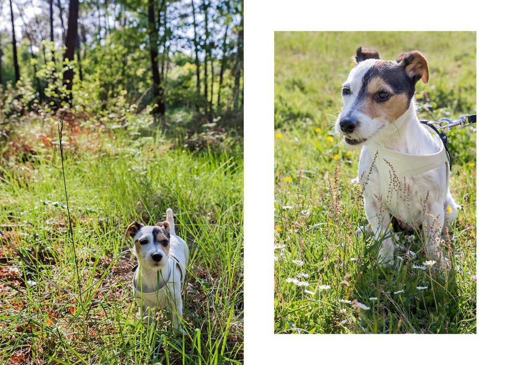 Séance photo portrait animaux / portrait chien photographe Bordeaux