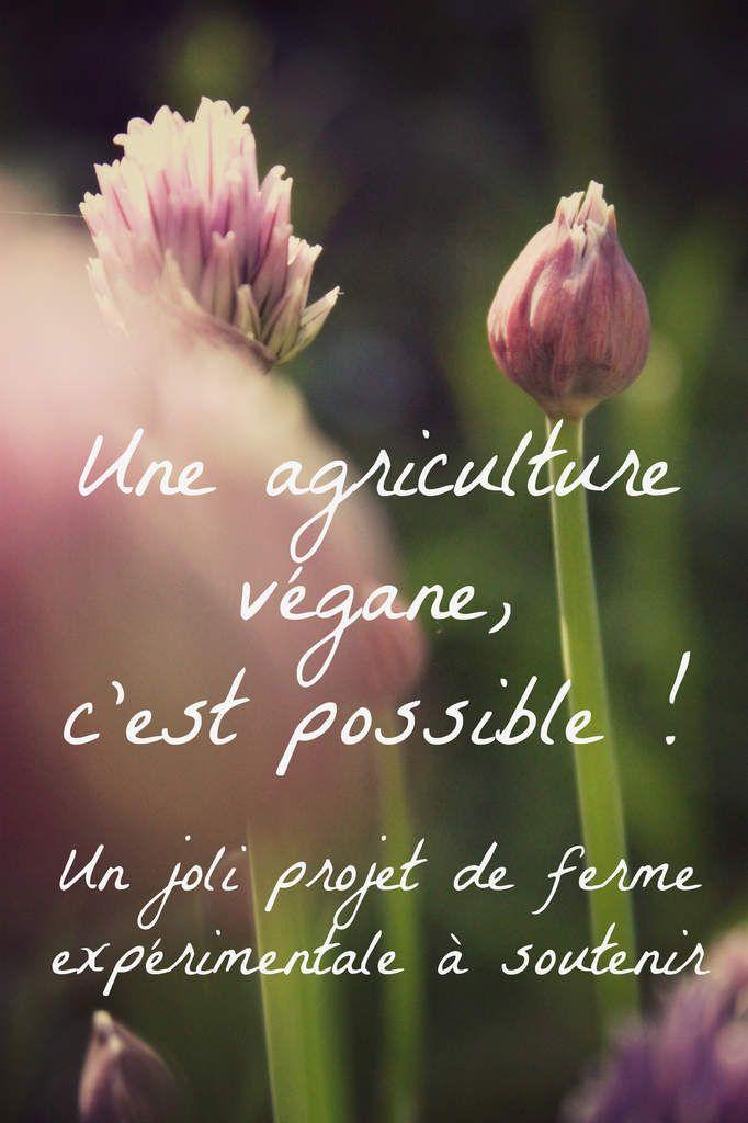 Une agriculture végane, c'est possible ! Un chouette projet de ferme expérimentale à soutenir {L'escargot tranquille}