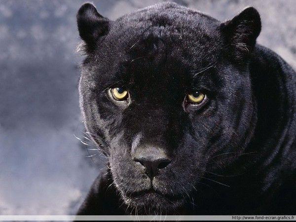 Un des animaux majestueux