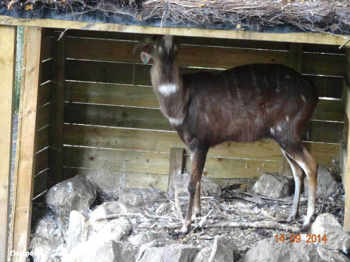 émeu et antilope Beauval 14 septembre 2014